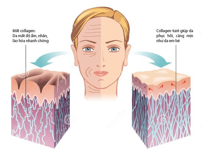 collagen-thay-da-2