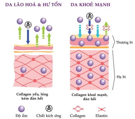 Collagen tươi có tốt không?
