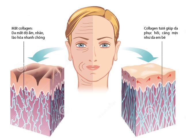 tac-dung-cua-collagen-tuoi-doi-voi-lan-da-1