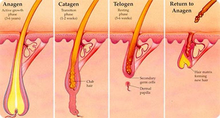 Qui trình yếu và gãy rụng của lông sau điều trị bằng laser