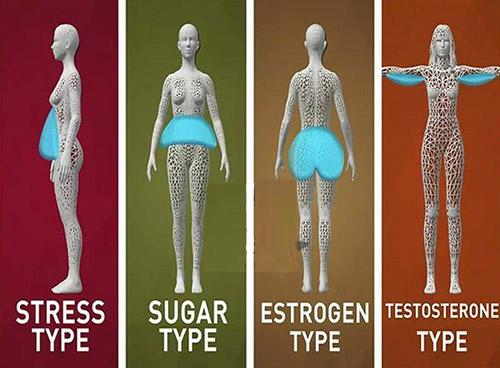 Từ trái sang phải: Béo do căng thẳng, do nghiện đồ ngọt, do hormone estrogen, do testosterone.