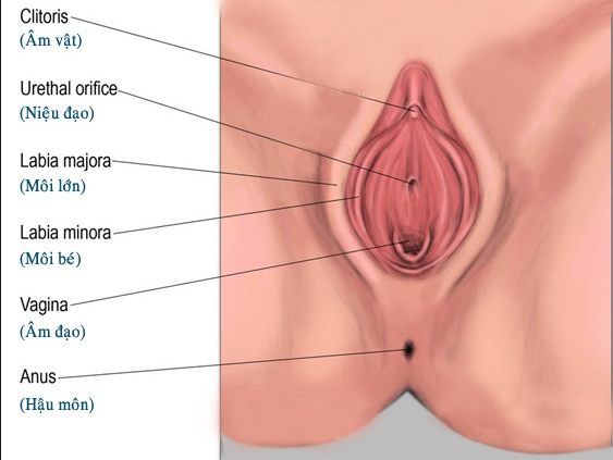 Phẫu thuật thu nhỏ môi lớn