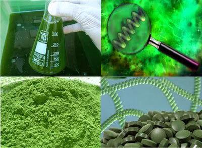 trị nám bằng tảo xoắn
